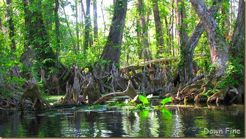Silver Springs State Park_023