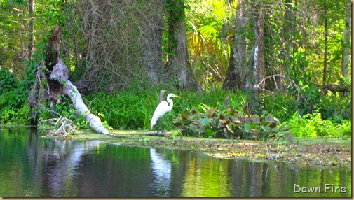 Silver Springs State Park_041