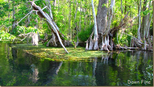 Silver Springs State Park_060