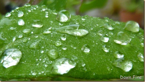 Water droplets and flowers_061