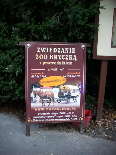 Zwiedzanie zoo bryczką