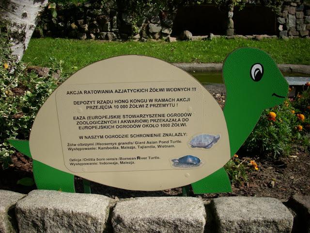 Akcja ratowania azjatyckich żółwi wodnych