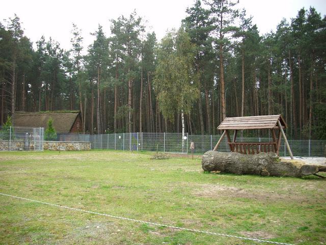 Wybieg wielbłąda dwugarbnego - Zoo Człuchów