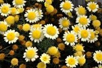 Fotos de plantas com flores