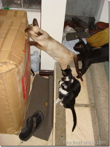Cat Welcoming Committee 1