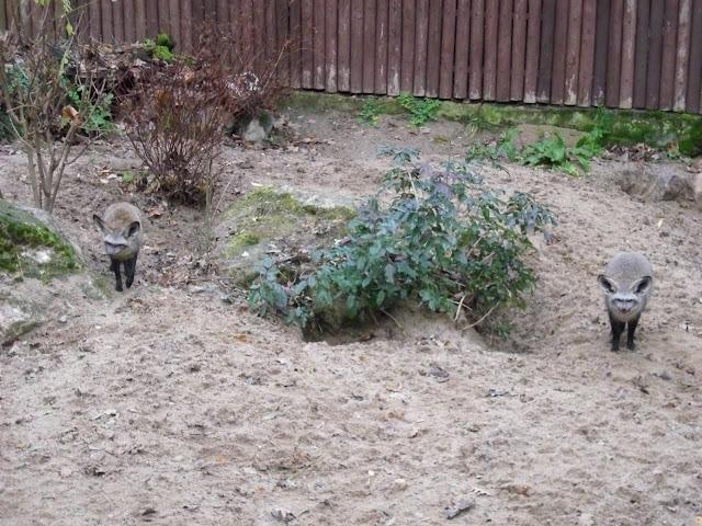 Pan Otocjon i Pani Otocjonowa na straży rodziny - Nowe Zoo Poznań