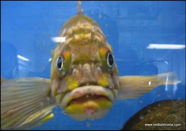 fish-faces21.jpg