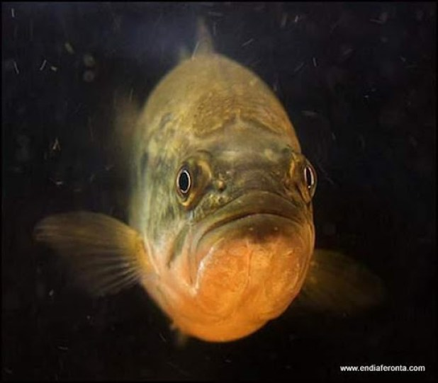fish-faces07.jpg