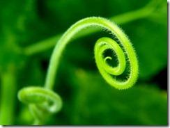 Spiral_by_fi?as