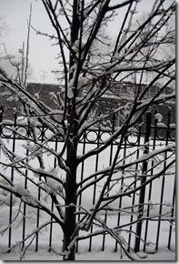 Snow 192