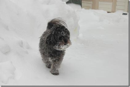 Snow 641