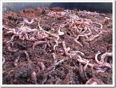 500 worms and counting