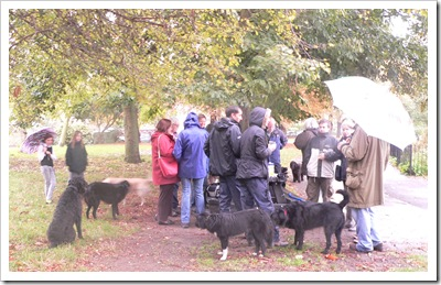 Doggie Group