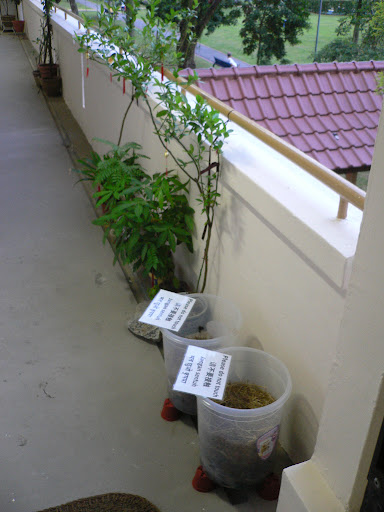 We totally neglected our compost bins :) | Composting In Singapore