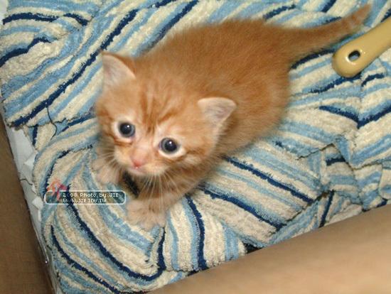 幼貓橘子貓