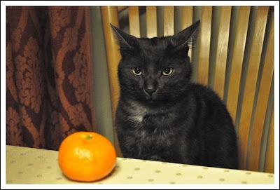 Exotic Cat Fruit