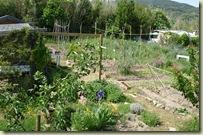 garden may 08_1_2_1