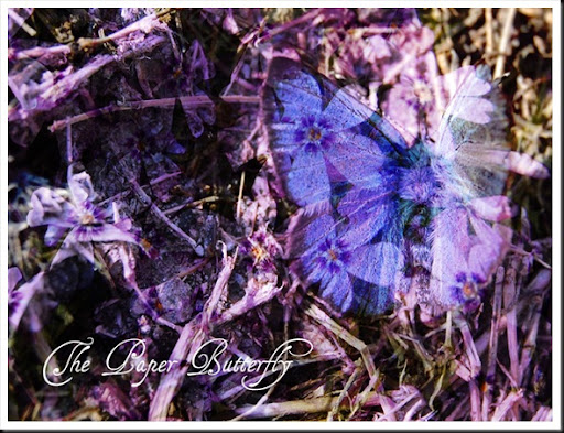 Butterfly Bleu