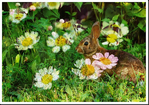 RABBIT and Chamomile Flowers