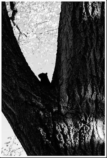 Hiding Squirrel