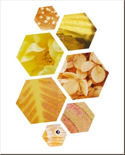 Honeycomb 8x10 WM