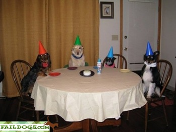 faildog-dogpartyfails