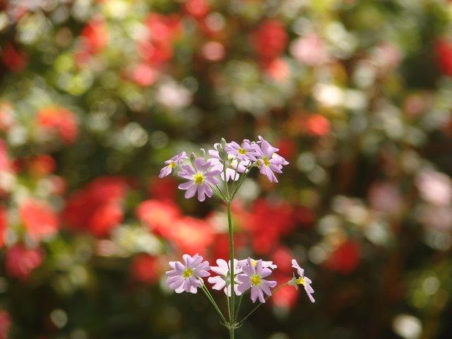 from Botanical Garden