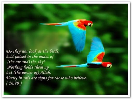 https://i1.wp.com/lh4.ggpht.com/__TnIMP0TSi8/SskzNO-y9tI/AAAAAAAAAGc/4bQcjj_L20k/birds.jpg