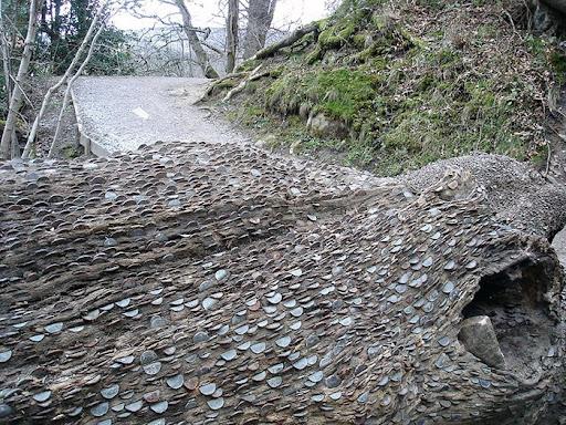 money-alberi (4)