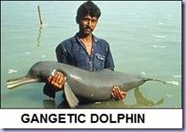gangetic dolphin