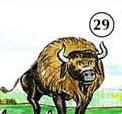 29. Bisonte