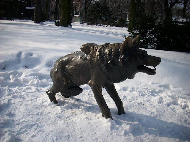 Przyczajony wilk, odgarnięty śnieg...