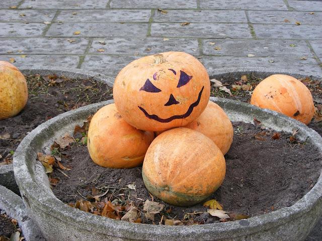 Halloween w Starym Zoo - bez strachów i przebierańców, ale za to z ogromną ilością złowrogo uśmiechających się dyń... (fot. NiK)
