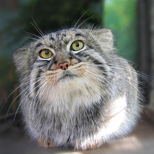 Почему кот стал писать не в лоток - f