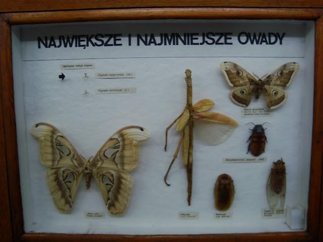 Największe i najmniejsze owady