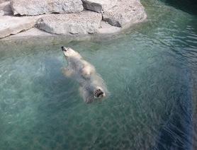 Toronto_zoo (6)