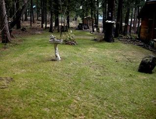 April yard Rocky Point (11)