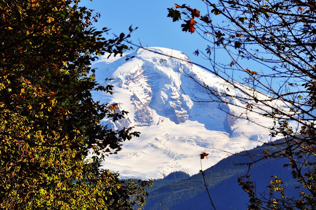 Mount Baker National Forest