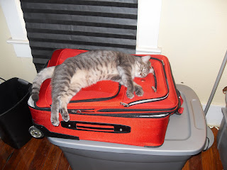 Kitty passed out on suitcase
