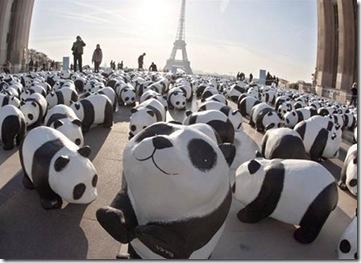 pandas em Paris