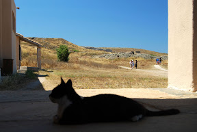 Delos Mykonos Greece cat