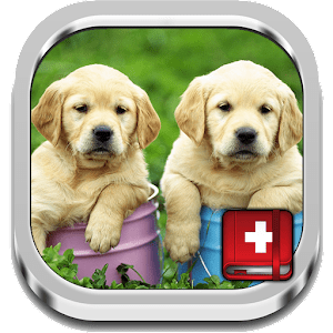 Dog Symptoms Cure