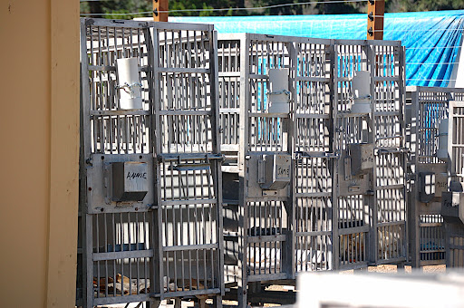 Steel transport cages,  now educational demos.