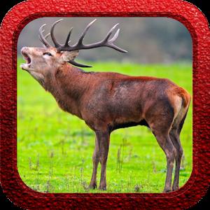 Red Deer Hunter