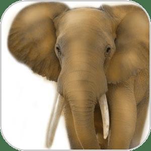 How To Draw Elephant Animal