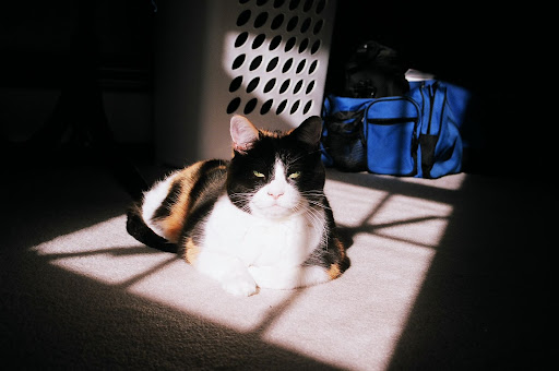 Stella looking like some cat mafia boss