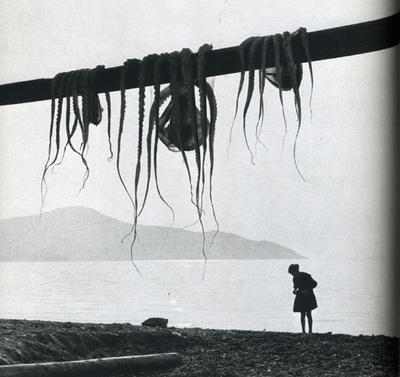 meduse.JPEG