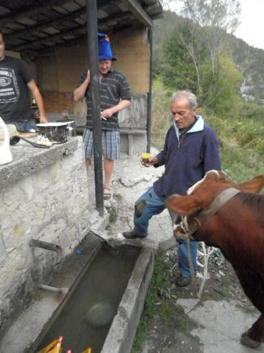 A local came by to give his cow a drink from the local spring.