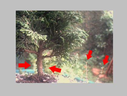 As folhas menores ao redor do bonsai serão estáticas