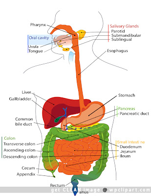 Schematic Gi Tract - House Wiring Diagram Symbols •
